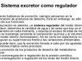 El sistema excretor como regulador