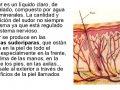 ¿Por qué la piel pertenece al sistema excretor?