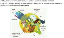 ¿Por qué el sistema excretor es fundamental para los seres vivos?