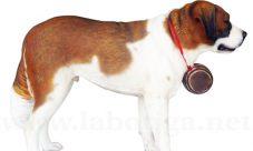Sistema excretor del perro